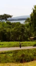 The coastal views off Brownsea Island